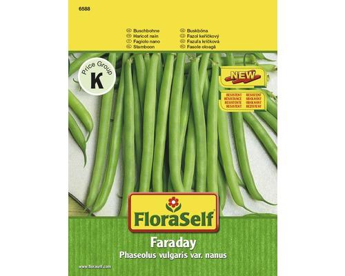 Graines de haricot nain FloraSelf «Faraday»