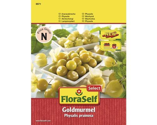 Ananaskirsche, Physalis FloraSelf Select pruinosa 'Goldmurmel' Gemüsesamen