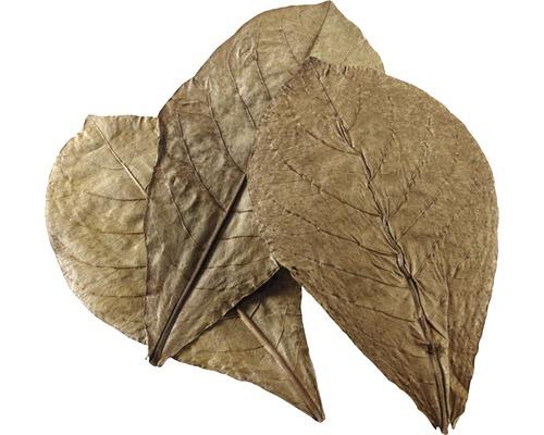 Nano-feuilles de badamier HOBBY Catappa Leaves 12 pièces