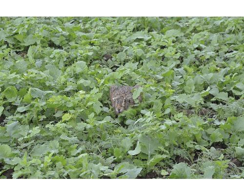 Semences de prairie Kiepenkerl mélange de plantes pionnières 10kg 3300m²