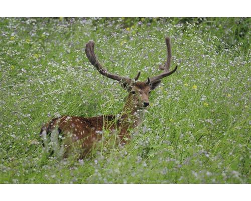 Semences de prairie Kiepenkerl mélange de protection de la faune 10kg 2800m²