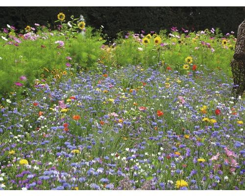 Semences de prairies de fleurs Kiepenkerl paradis pour les insectes 1kg 125m²