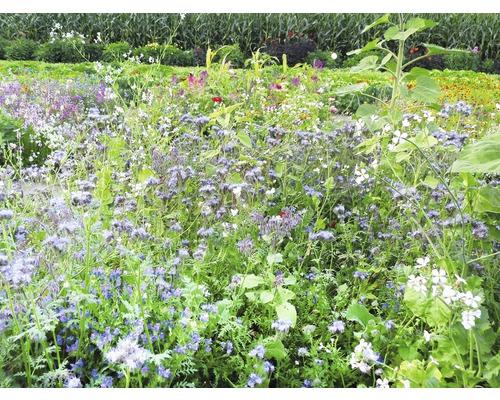 Semences de prairies de fleurs Kiepenkerl plantes apicoles pluriannuelles 1kg 500m²