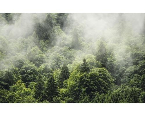 Papier peint photo intissé PSH061-VD4 Forest Land