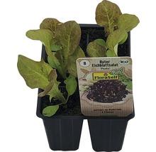 Laitue feuille de chêne FloraSelf Bio Letuca sativa ''Piro'' pot Ø 6 cm 6 plants-thumb-0