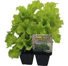 Lollo bionda FloraSelf Bio Letuca sativa pot Ø 6 cm lot de 6-thumb-0
