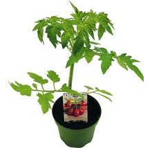 Tomate FloraSelf Bio Lycopersicum esculentum var. Esculentum pot Ø 9 cm-thumb-0