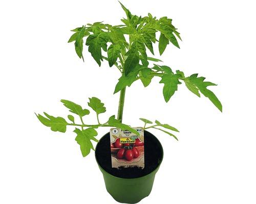 Tomate FloraSelf Bio Lycopersicum esculentum var. Esculentum pot Ø 9 cm-0
