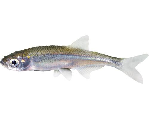 Aquarium Fische & Co.
