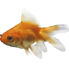 Poissons d'aquarium & autres animaux marins
