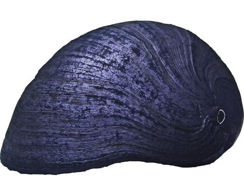 Patellidae anthracite