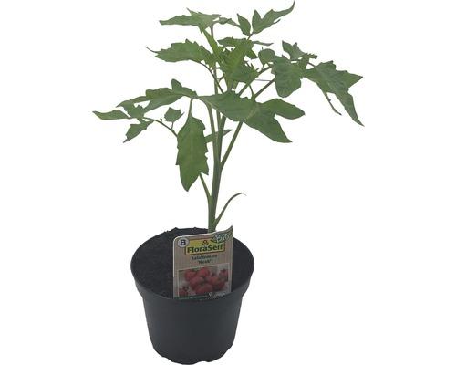 Tomates FloraSelf Bio Lycopersicum esculentum var. esculentum pot Ø 9 cm assorties