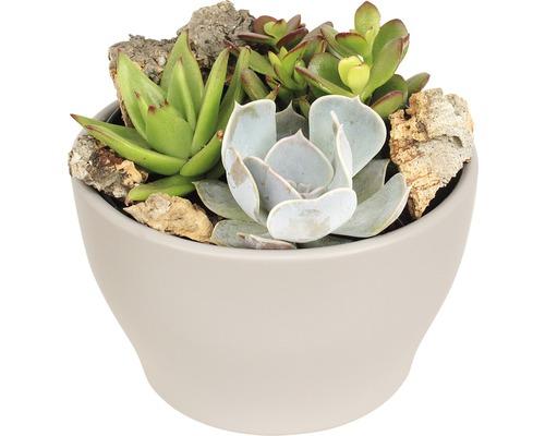 Arrangement de plantes succulentes FloraSelf H11-16 cm pot gris pierre Ø 15 cm