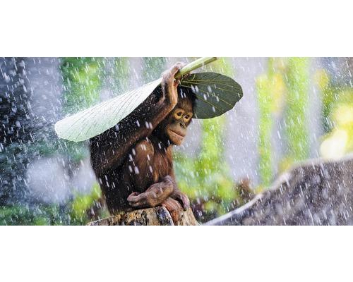 Carte postale Orang-Outan 11x23cm