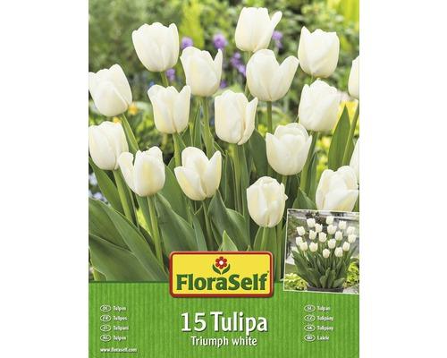 Kit promotionnel de bulbes de tulipes Triumph blanches 15 un.