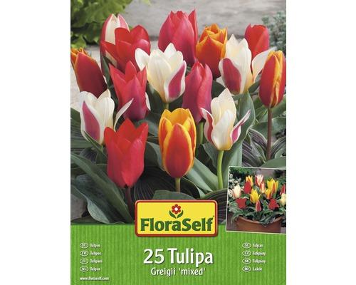 Kit promotionnel de bulbes de tulipes mélange Greigi 25 un.