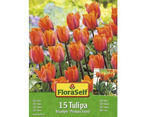 Kit promotionnel de bulbes de tulipes Prinses Irene 15 un.