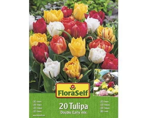 Kit promotionnel de bulbes de tulipes pleines mélange 20 un.