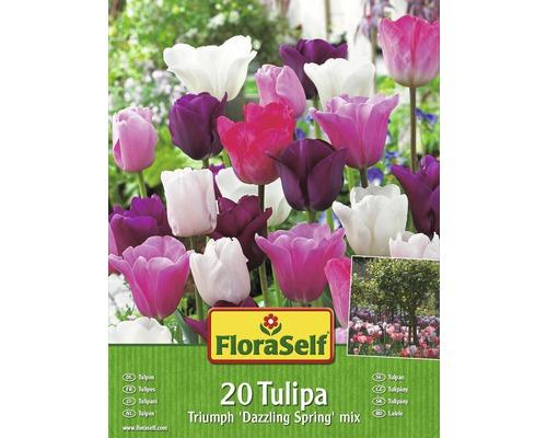 Kit promotionnel de bulbes de tulipes mélange Dazzling Spring 20 un.