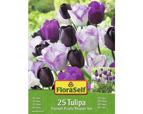 Kit promotionnel de bulbes de tulipes mélange Purple Passion 25 un.