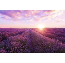 Panneau décoratif Lavender Field 61x91 cm-thumb-0