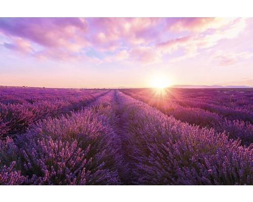 Panneau décoratif Lavender Field 61x91 cm