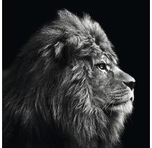 Tableau sur toile Grey Lion Head 27x27 cm-thumb-0