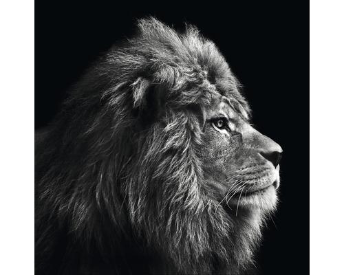 Tableau sur toile Grey Lion Head 27x27 cm-0