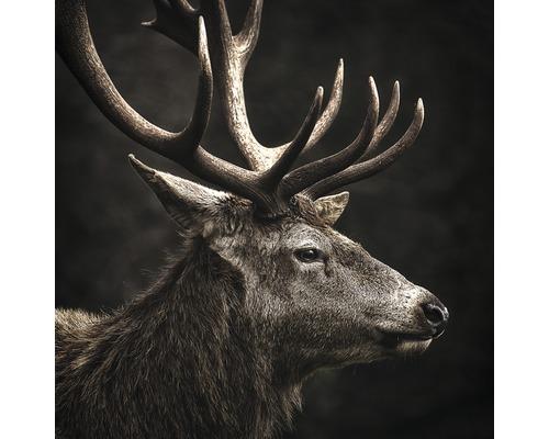 Tableau en verre Brown Deer Head 50x50 cm