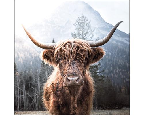 Tableau en verre Highland Cattle 50x50 cm