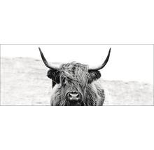 Tableau en verre Highland Écossais Cattle ll 30x80 cm-thumb-0