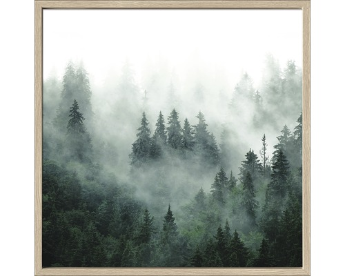 Image encadrée Forest Feeling l 53x53 cm