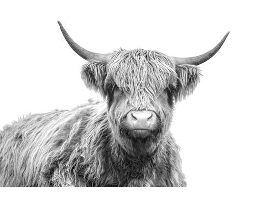 Tableau sur toile bœuf Highland 100x150 cm