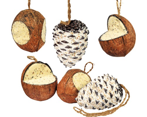 Mélange de nourriture pour oiseaux, noix de coco et pins géants, 6 pièces