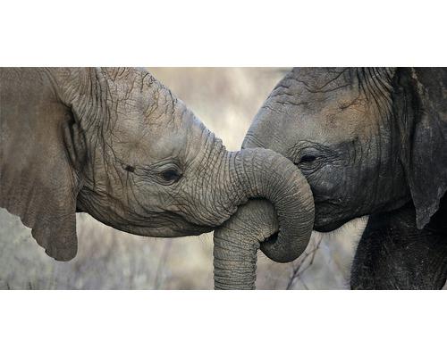 Carte panorama deux éléphants 11x23 cm