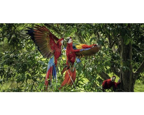 Carte postale Geo XXL Deux perroquets 11x23 cm