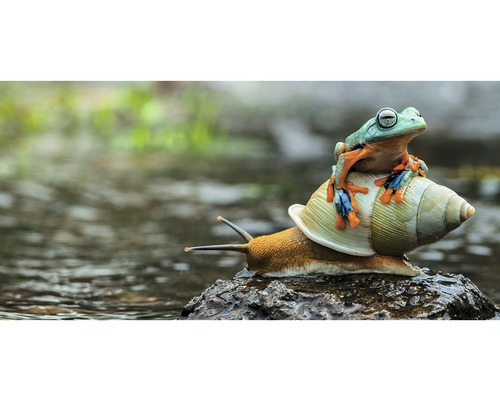 Carte postale Geo XXL Escargot & grenouille 11x23 cm