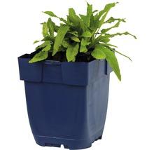 Sauge Salvia nemorosa ''Ostfriesland'' h 5-50 cm Co 0,5 l (6 pièces)-thumb-1