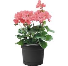 Pots de fleurs pour balcon allin1 plastique 1 pce-thumb-1