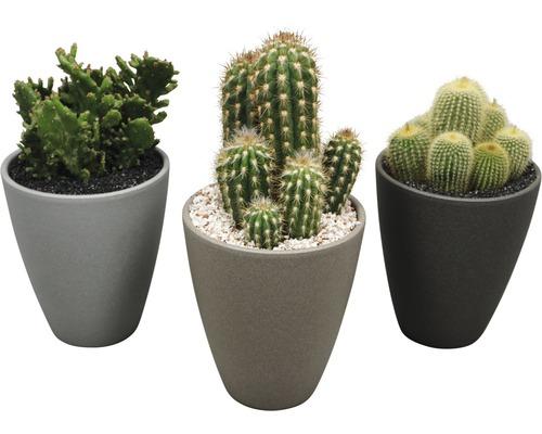 Cactus H28-32 cm Ø 13 cm pot en céramique