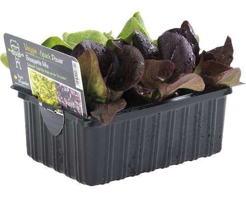 Salanova (salade) FloraSelf Lactuca sativa 6 pièces-0