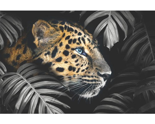 Maxiposter Leopard Leafs 61x91,5cm