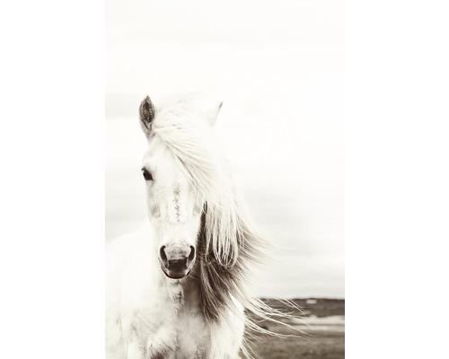 Maxiposter White Horse 61x91,5cm