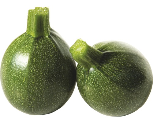 Courgette FloraSelf Cucurbita pepo pot Ø 10,5 cm