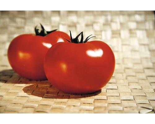 Tomate charnue ''Fantasio'' F1 FloraSelf pot Ø 12 cm greffée