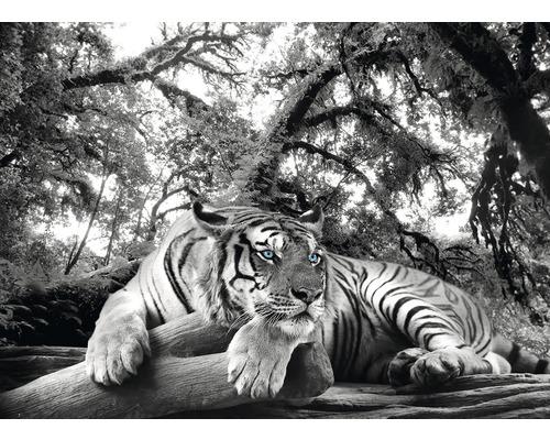Panneau décoratif Tigre 98x136 cm