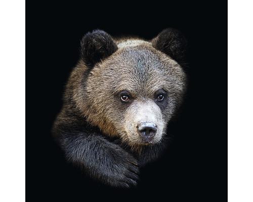 Tableau en verre Portrait of a bear 50x50cm