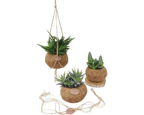 Kokodama retombant FloraSelf Mélange d''aloès en ensemble de suspension florale, hauteur avec pot 15-20 cm pot Ø 15 cm différentes sortes