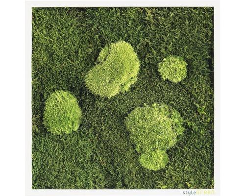 Tableau mousse Forêt & mousse ronde 35x35 cm