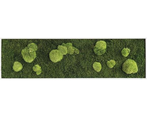 Tableau mousse Forêt & mousse ronde 140x40 cm